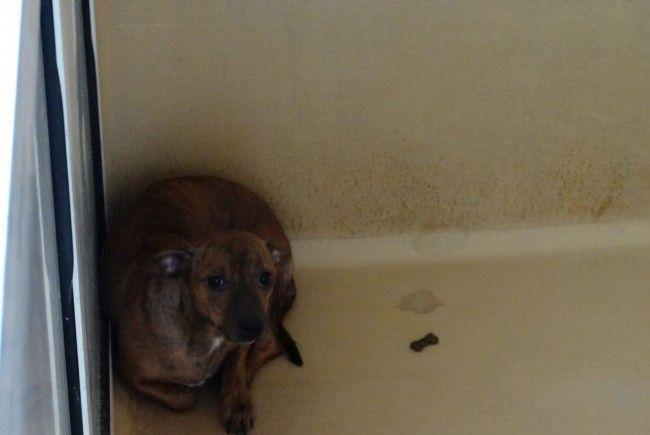 Gerettet, aber noch verstört: Hundemama Ashanti