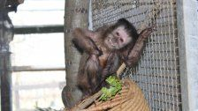 Im Affenhaus des WTV herrscht Hochbetrieb
