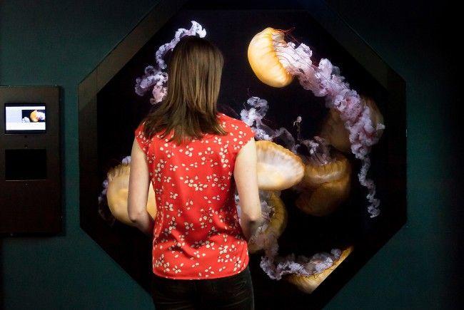 Der Quallenkreisel im Tiergarten Schönbrunn erlaubt Quallen-Beobachtung