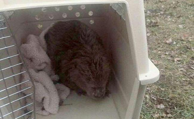 Das verletzte Tier wurde von einer Passantin entdeckt.