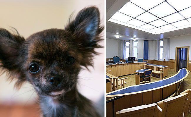 Der kleine Chihuahua überlebte den Vorfall nicht