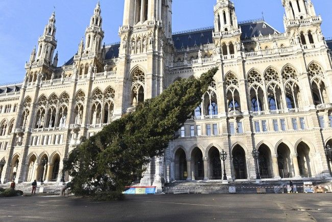 Am Freitag wurde der Christbaum vor dem Wiener Rathaus gefällt.