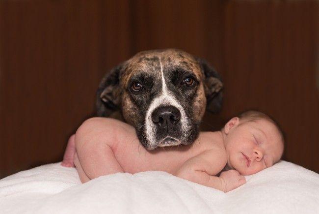 Baby und Familienhund: Mit ein bisschen Vorbereitung wird es eine dicke Freundschaft