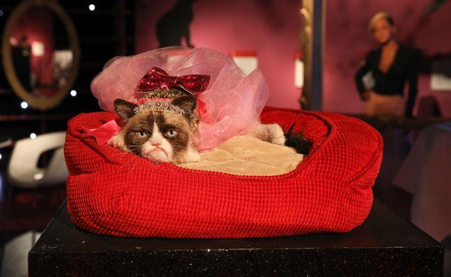 Grumpy Cat macht es sich bei Madame Tussauds in Wien gemütlich.