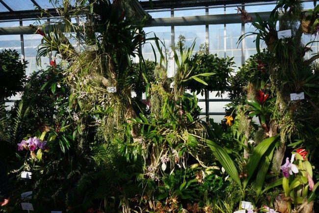 Bei der Orchideenschau in Wien können die tropischen Blumen bewundert werden.