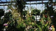 Orchideenschau in Hirschstetten