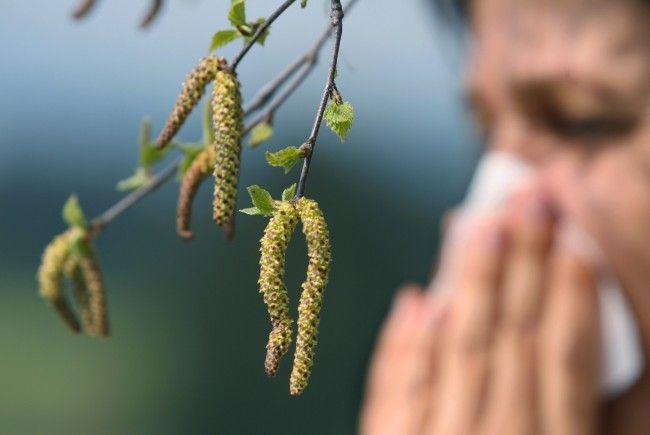 In Wien entwickelter Impfstoff gegen Gräserpollen-Allergie lindert Symptome