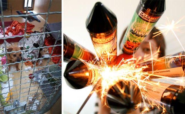 Ein Hund im WTV hatte aus Angst vor dem Feuerwerk in seinem Zwinger randaliert.
