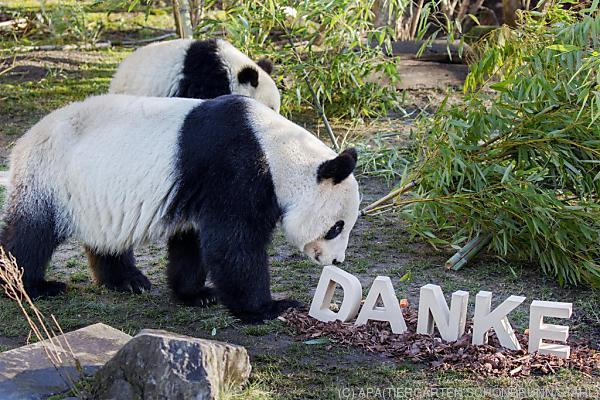 Die Pandas bedanken sich für die Preise