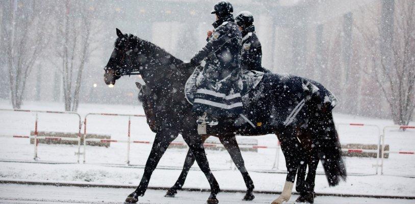 Berittene Polizei in Wien: Gemeinderat äußert sich entschieden gegen Einsatz
