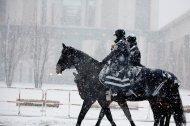Berittene Polizei in Wien: Gemeinderat äußert sich
