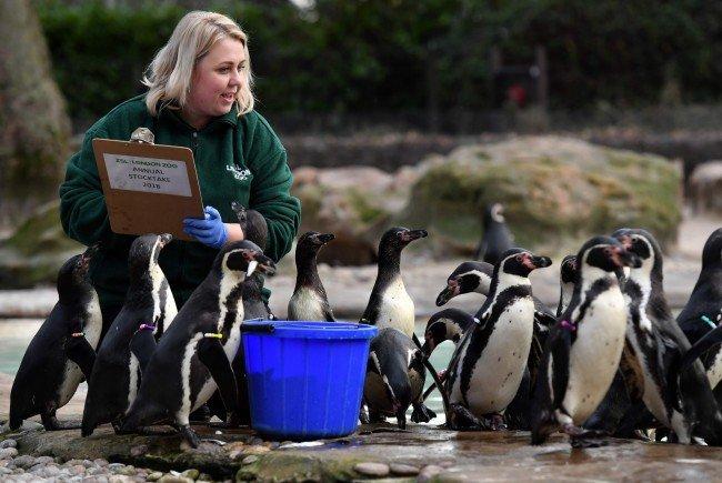 Die Pinguine stellten sich brav in einer Reihe auf.
