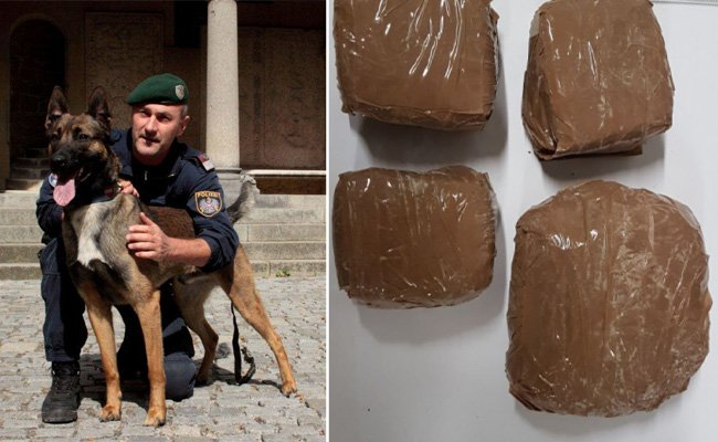 """Über Polizeihund """"Rasty"""" konnte ein großes Drogenversteck ausgemacht werden"""
