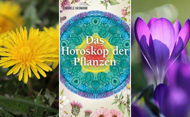 Welche pflanze  Das Horoskop der Pflanzen verrät: Welche Pflanze gehört zu dir ...