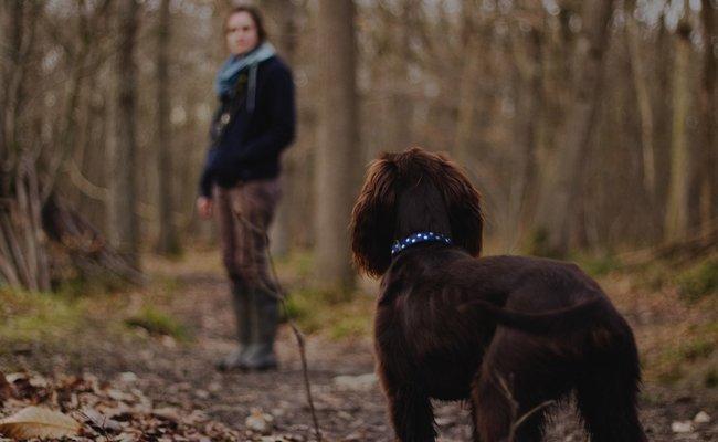 Die Zahl der Giftköder-Attacken auf Hunde nimmt zu.