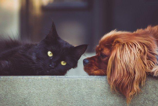 Hund und Katze kosten ihren Haltern einiges - ein Preisvergleich zahlt sich daher aus.