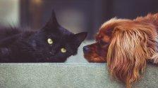 Wie viel Geld kosten uns Hund und Katze?
