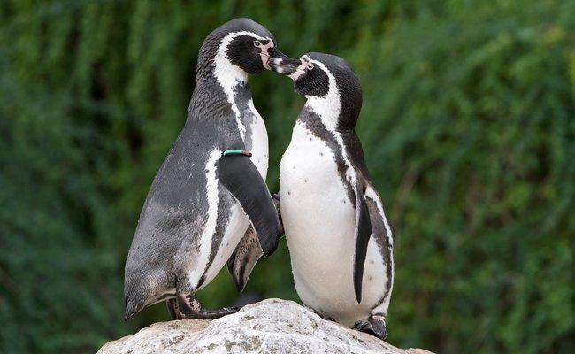 Der Tiergarten Schönbrunn lockt am Valentinstag mit einem besonderen Angebot.