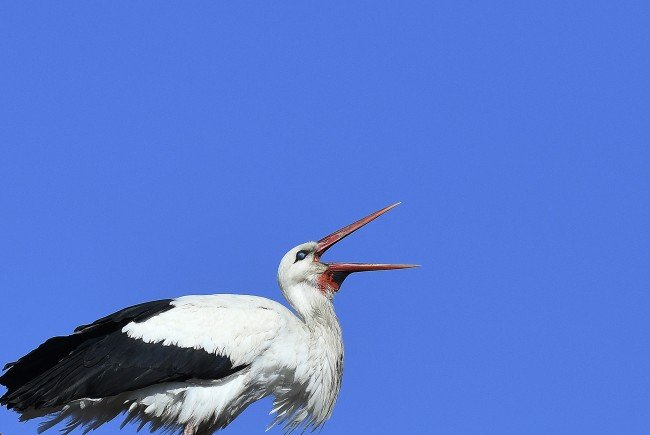 In Marchegg wurde der erste Weißstorch der Saison gesichtet.