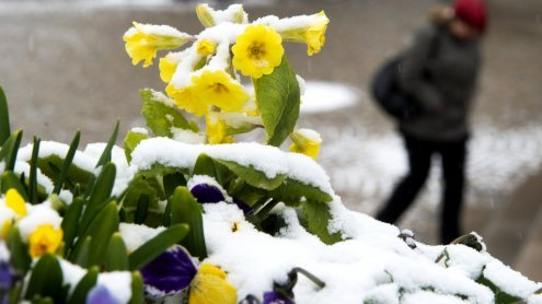 Frühlingsbeginn am 20. März: Späte Eistage in Wien sehr selten
