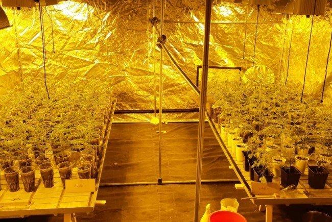 Der Züchter gab an, aus den Planzen Cannabis-Öl herstellen zu wollen.