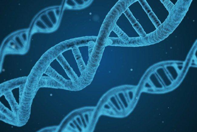 Die DNA der Alien-Mumie wurde untersucht.