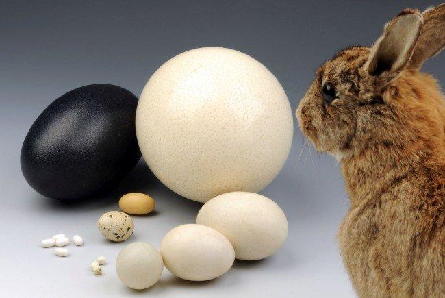 Der Osterhase hat die Qual der Wahl - unter so vielen Eiern wie im NHM konnte er noch nie auswählen.