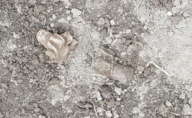 Zwei Teile von Werfergranaten aus dem 2. Weltkrieg wurden in Wien-Donaustadt gefunden.