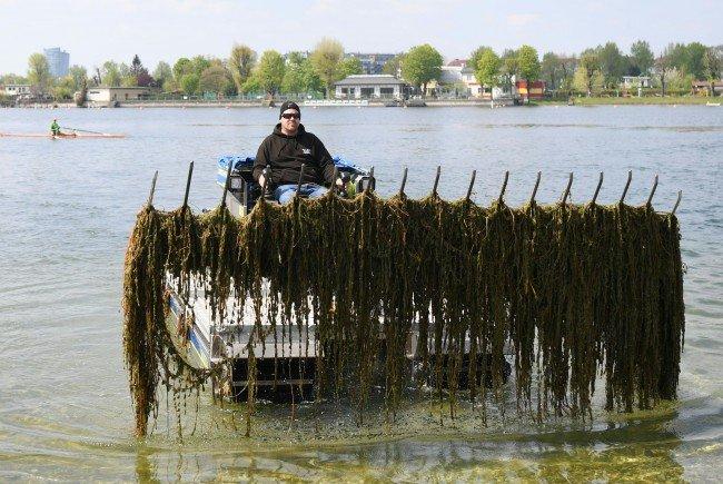 Mit den Mähbooten auf der Alten Donau gegen die Wasserpflanzen.
