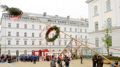Traditioneller Maibaum wird in Wien Ottakring aufgestellt