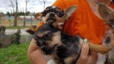 Wiener Tierschutzverein: Welpe aus Stall gestohlen