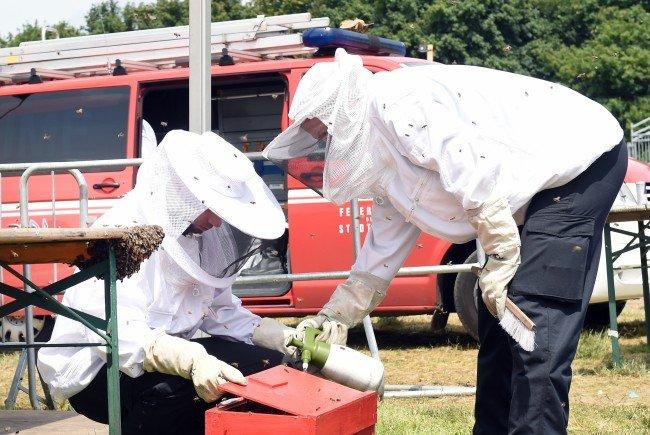 Der Bienenschwarm konnte sicher entfernt werden. / Symbolbild