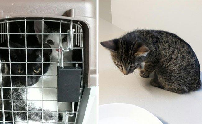 Die jungen Katzen konnten von der Polizei gerettet werden.