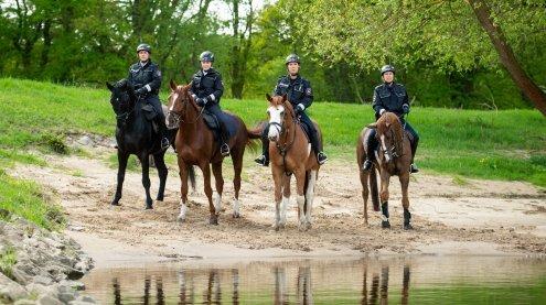 Testphase der berittenen Polizei startet bald in Wiener Neustadt