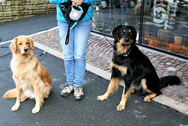 Hundehalter in Wien werden wieder verstärkt kontrolliert.