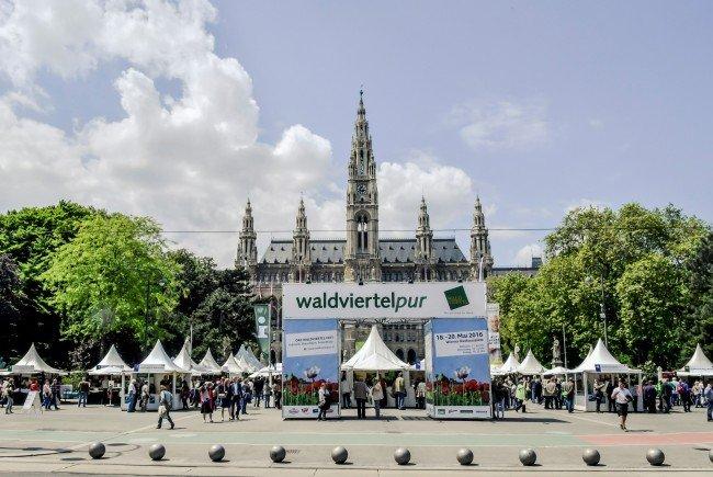 Am Wiener Rathausplatz tummeln sich wieder die Waldviertler.
