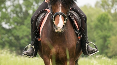 Schnur über Waldweg gespannt? 50-jährige Reiterin wurde verletzt