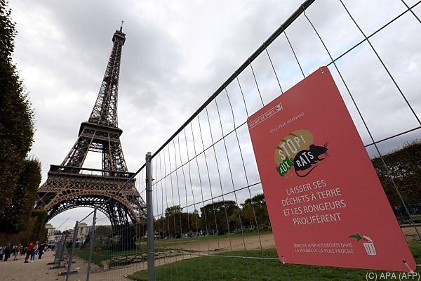 Paris leidet unter Millionen von Ratten