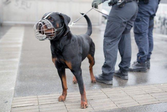 In Floridsdorf wird Wiener Schülern heute eine Vorführung mit Polizeihunden geboten.
